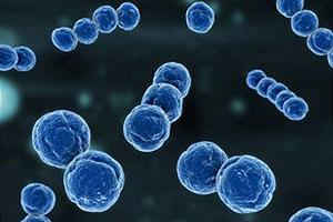 Полезные бактерии помогают нам выживать
