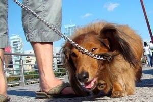 Собака на поводке и столбы