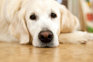 Циститы у собак